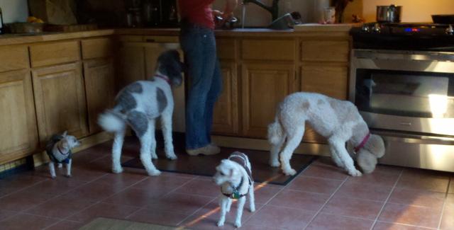 Molly and Pris at Kathy's