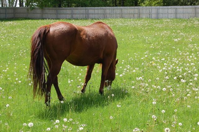 Lena grazing May 30