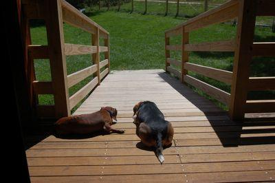 Widget and Dexter July 31