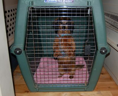 Sophie sitting up in crate 1
