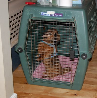 Sophie sitting up in crate 2