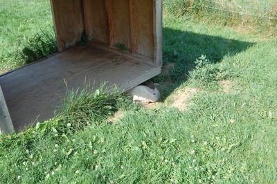 Travis under dog house 1