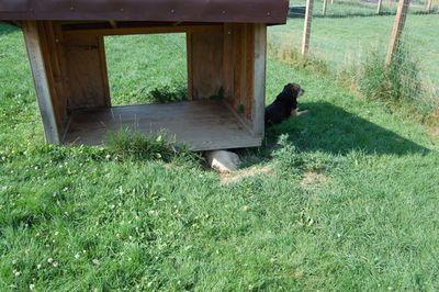 Travis under dog house 2