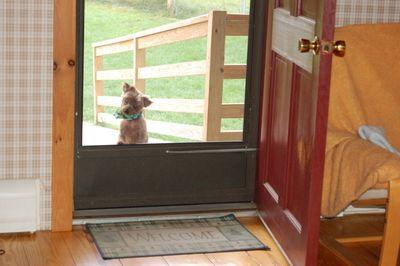 Clyde at door 1