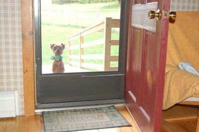 Clyde at door 2
