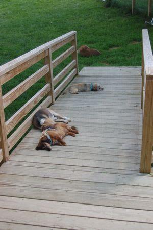 Dogs on ramp