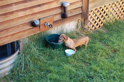 Belvie at water bucket