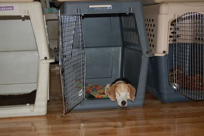Avery in crate