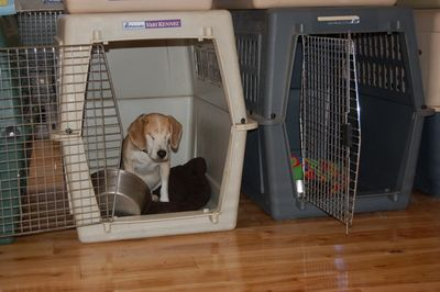 Avery in Willie's crate