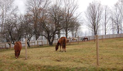 Horses grazing Nov 17