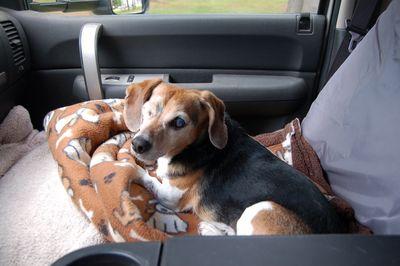 Widget in truck seat