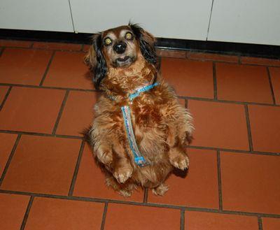 Sophie sitting up 1