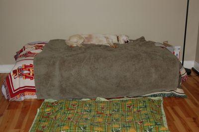 Spinner sleeping July 22