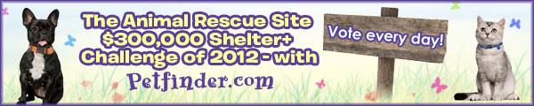 Shelter Challenge 2012 Logo