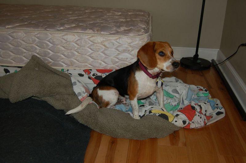Owen bed 10