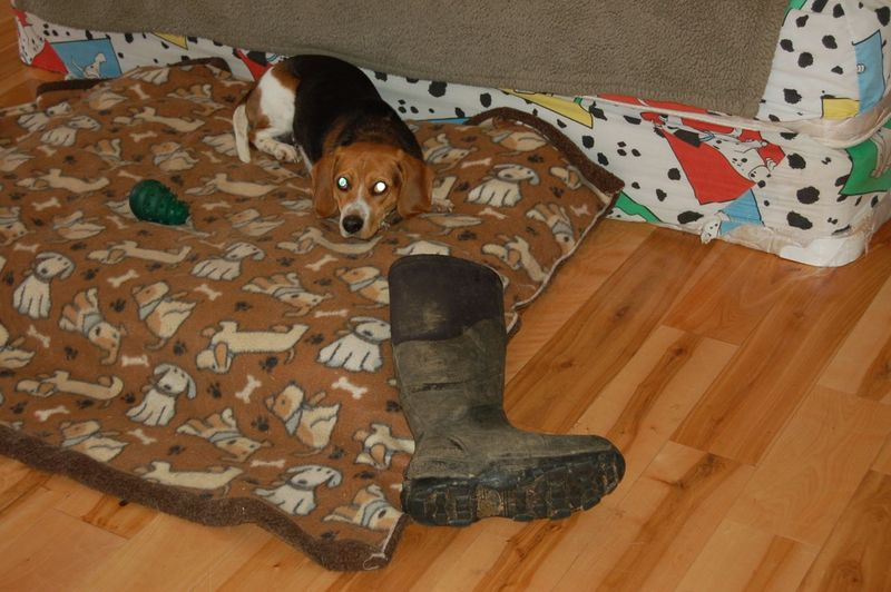 Owen with boot