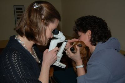 Max with slit lamp