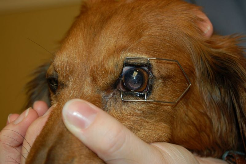 Max with eye frame