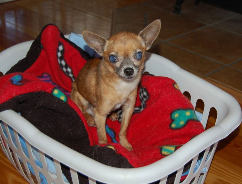 Pip in basket