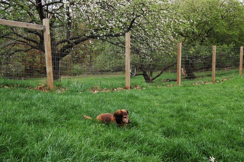 Sophie in grass