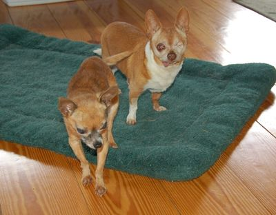 Wilbur and Pip