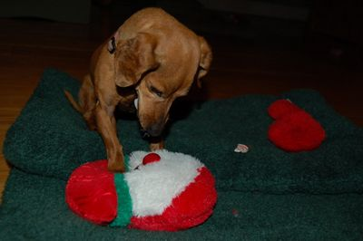 Daisy with toy 7