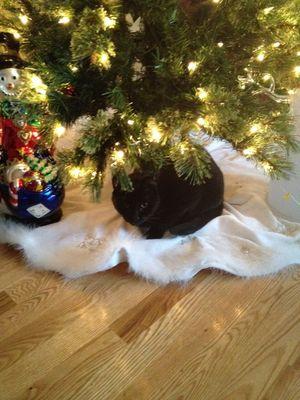 Mink under Xmas tree