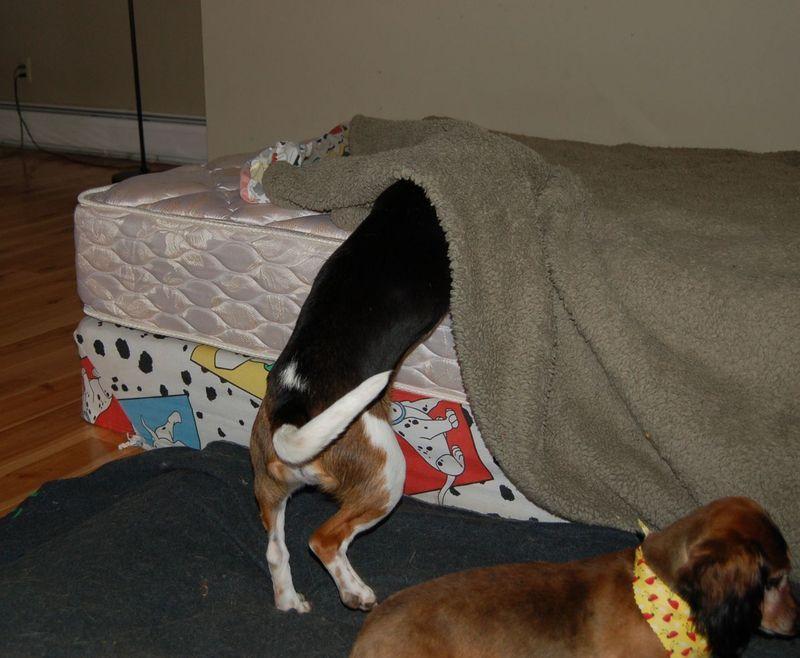 Owen bed 1