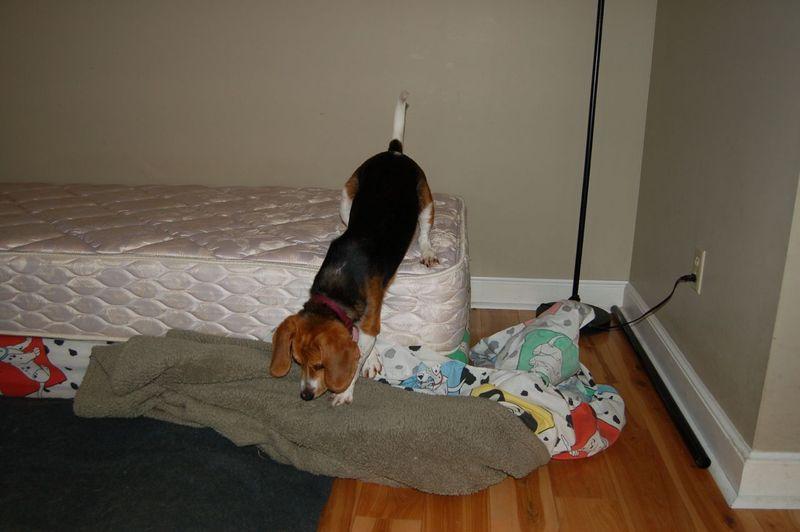 Owen bed 9