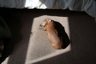 Dexter in sunshine