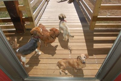 Dogs at door with Widget on ramp
