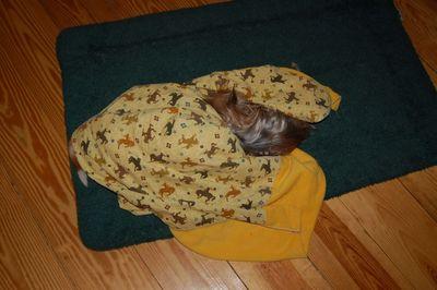 Penny next to Wilbur under blanket