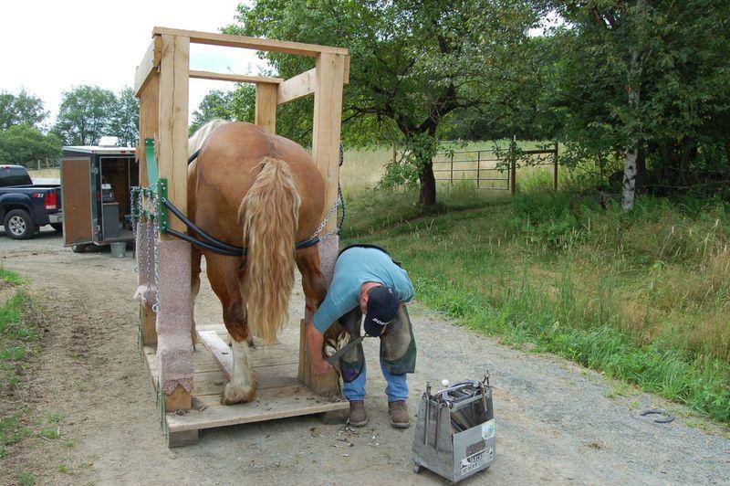 Bill in horse stock 2