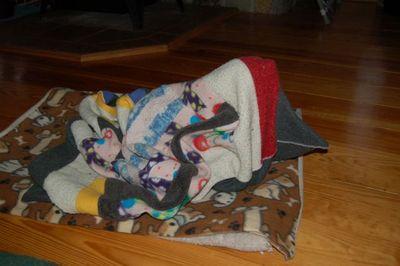 Wilbur blanket 8