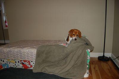Owen bed 7