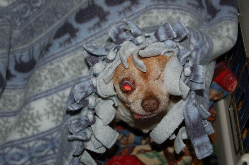 Wilbur wearing blanket