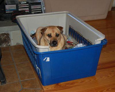 Holly in Wilbur's bed