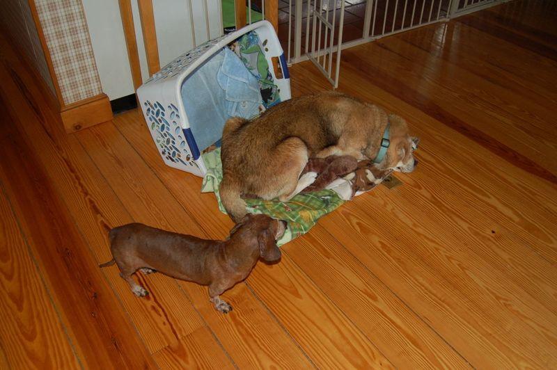 Madison in Dexter's basket