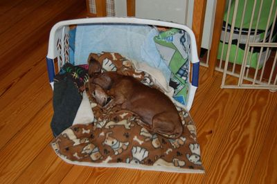 Dexter in basket bed