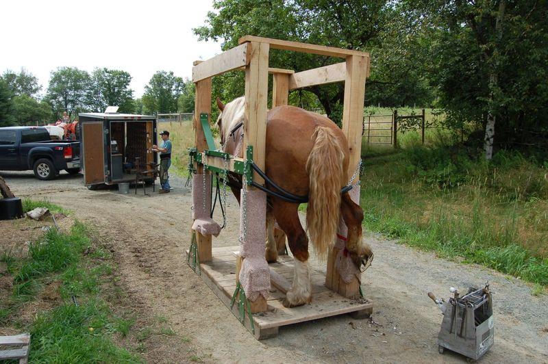 Bill in horse stock