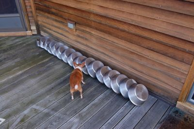 Wilbur and dishes 2