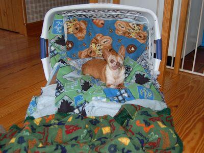 Wilbur on throne