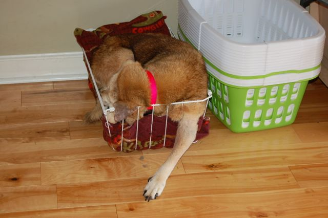 Madison in basket 2