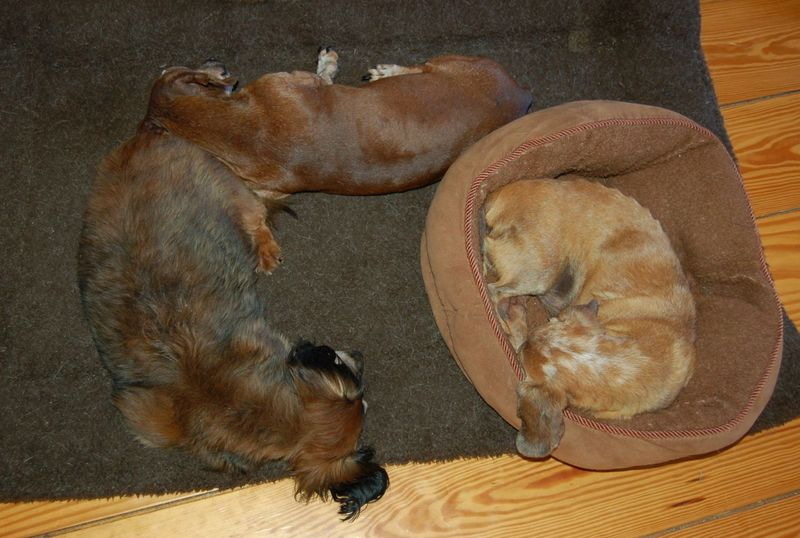 Three doxies on bed