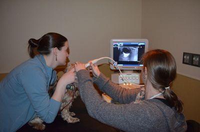 Bentley eye ultrasound