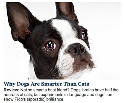 WSJ on Dogs vs Cats