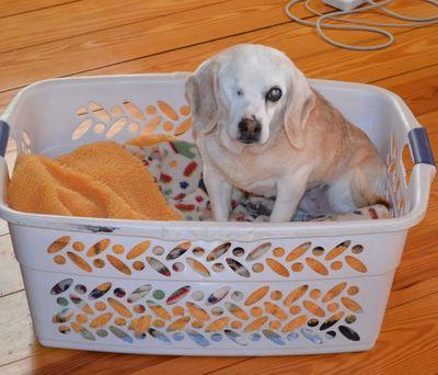 Aurora in basket 2