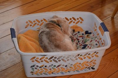 Aurora in basket again