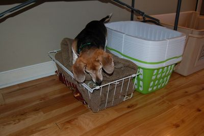 Widget in basket 3