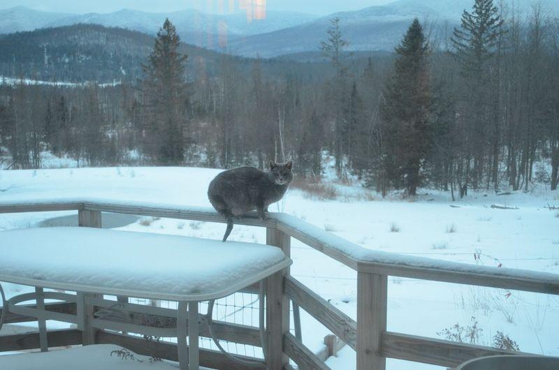 Skitter on railing 2